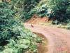 林道途中で見た野ウサギ