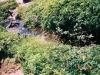 七ツ沼カールの水場(左)