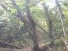 二合目と三合目の間の倒木