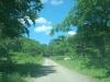 付近の林道の様子