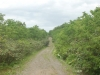 林道後半その2