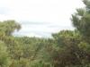頂上付近のハイマツ帯