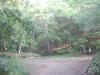 下の方の林道との分岐