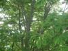 三角山より木々の間から百松沢山方面を望む